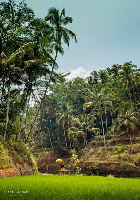 shrine-tegallalang-rice-terraces-ubud-ba