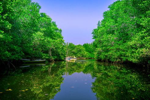 mangrove-forest-river-nusa-lembongan-bal
