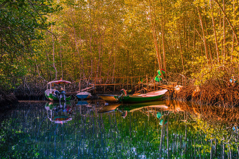 colourful-tropical-mangroves-boats-river