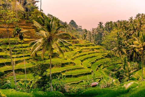 sunset-tegallalang-rice-terraces-landsca