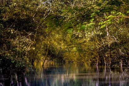 amazon-river-rainforest-tree-jungle-refl