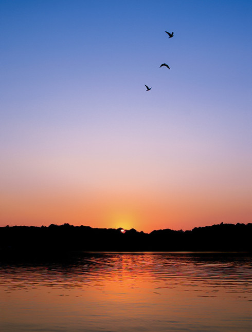 birds-flying-sky-sunset-kentucky-lake-pa