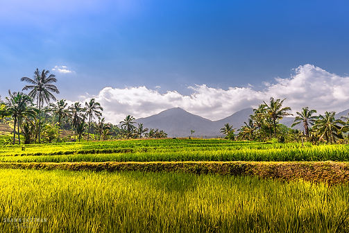 Landscape photograph of crops and mountains in Bali, Indonesia