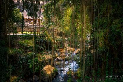 stream-forest-jungle-foliage-gunung-kawi