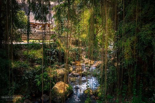 Nature photograph in Ubud, Bali, Indonesia