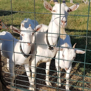 Goats and Such