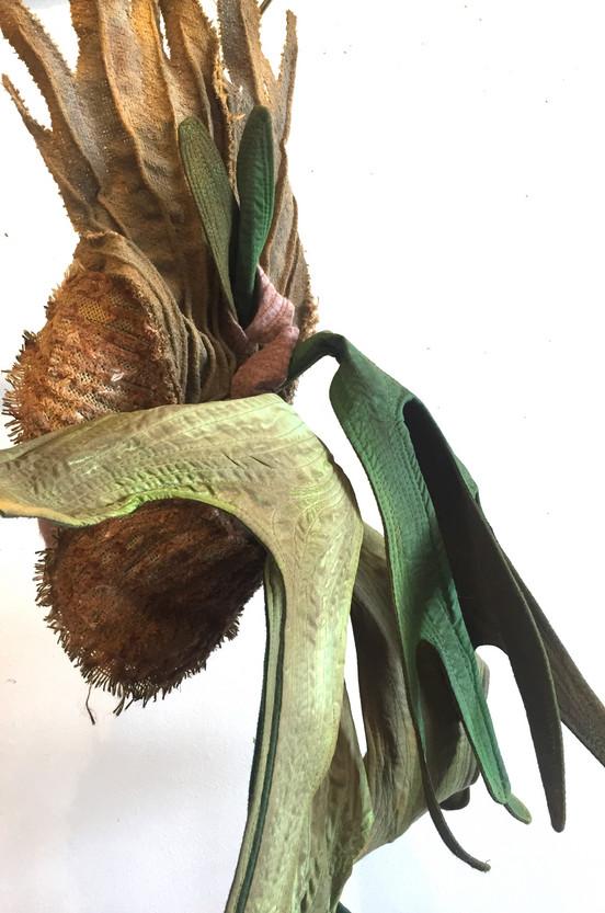 Textile plantsPlaticerium 7_edited.jpg