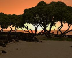 Ku-kio Beach (4).jpg