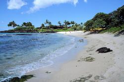 Ku-kio Beach (1).jpg