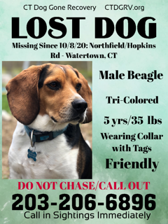 Watertown Beagle .PNG