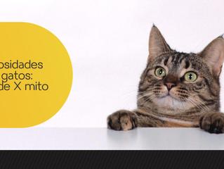 Curiosidades sobre gatos: verdade X mito