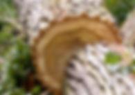 kůže na výrobu obuvi berkemann