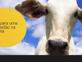 Dicas para uma boa gestão na pecuária