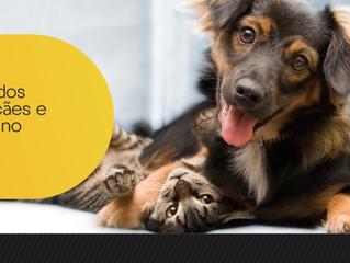 Cuidados com cães e gatos no verão
