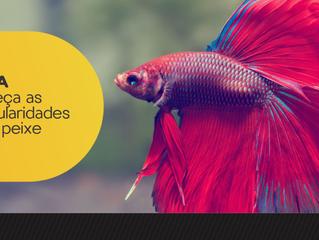 Peixe Betta - Conheça as particularidades deste peixe