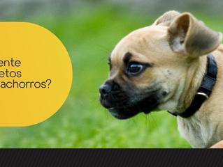 Repelente de insetos para cachorros?