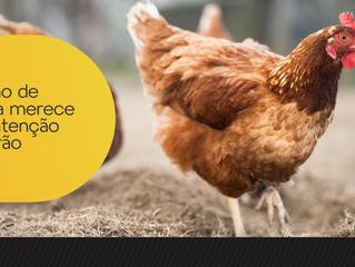 Criação de galinha merece mais atenção no verão