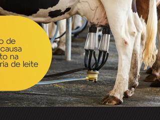 Horário de verão causa impacto na pecuária de leite