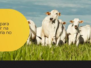 Dicas para investir na pecuária no Brasil