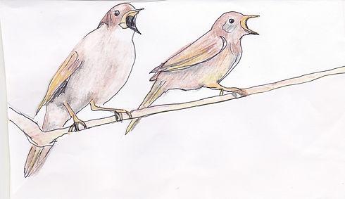 Nightingales 2.jpg