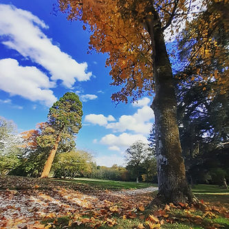 Parc Château d'Amenon.jpg