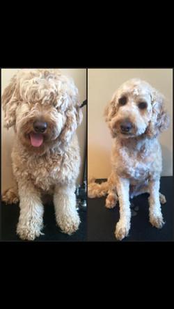 Dog Grooming Kemptville Ontario