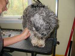 This dog is in need of a groom