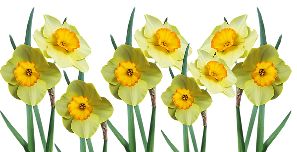 flowers-5378963_960_720.png