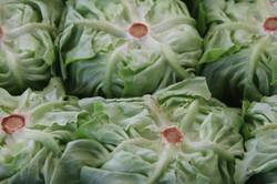 Lettuce Brugges