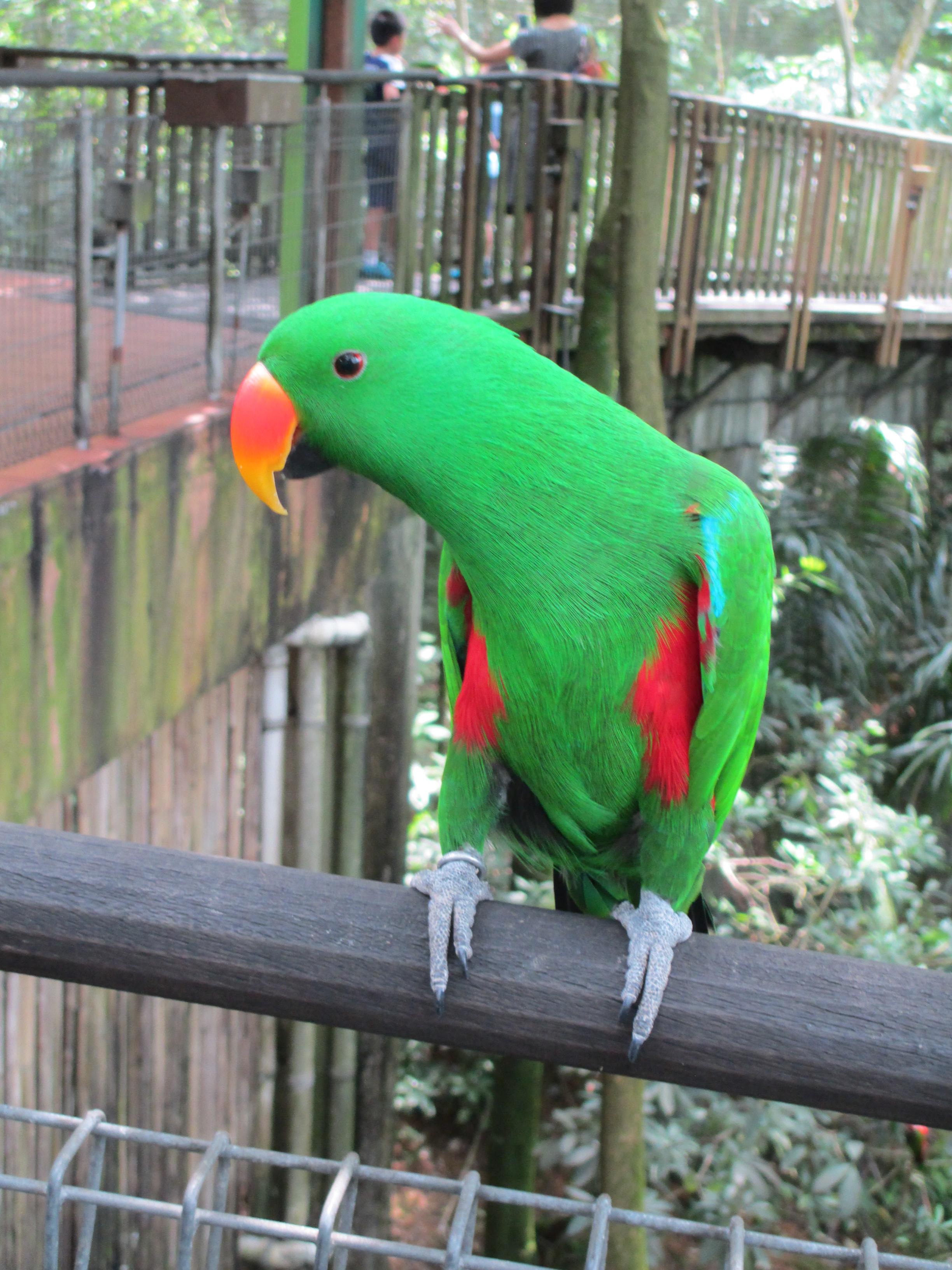 Parrot Singapore