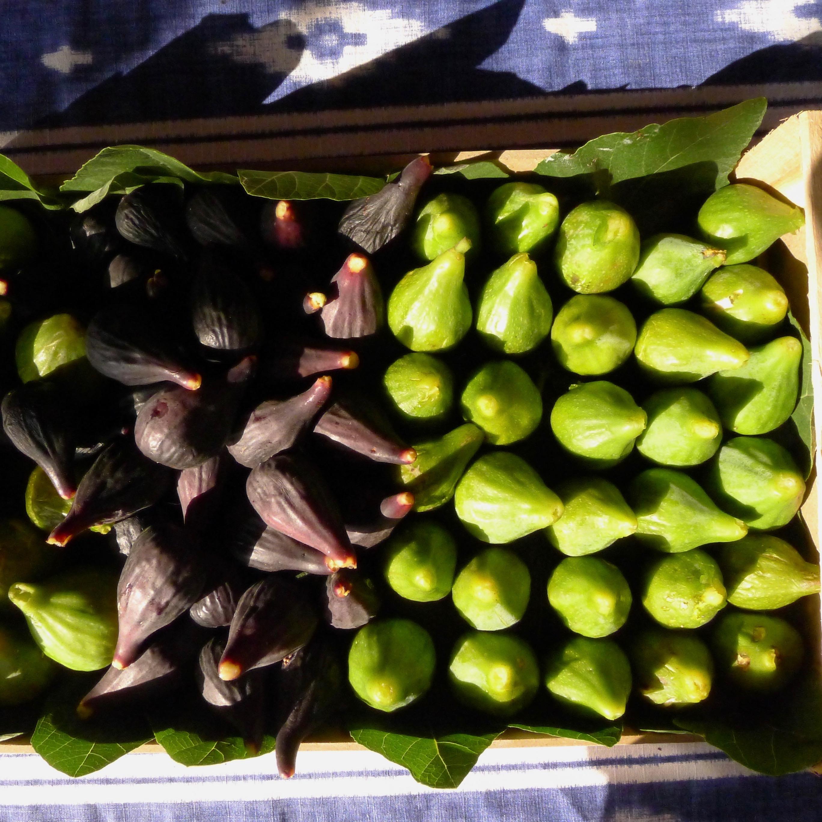 Harvest. Tuscany