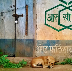 Monsoon dog