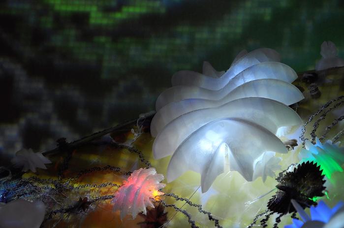 barnacles2.png