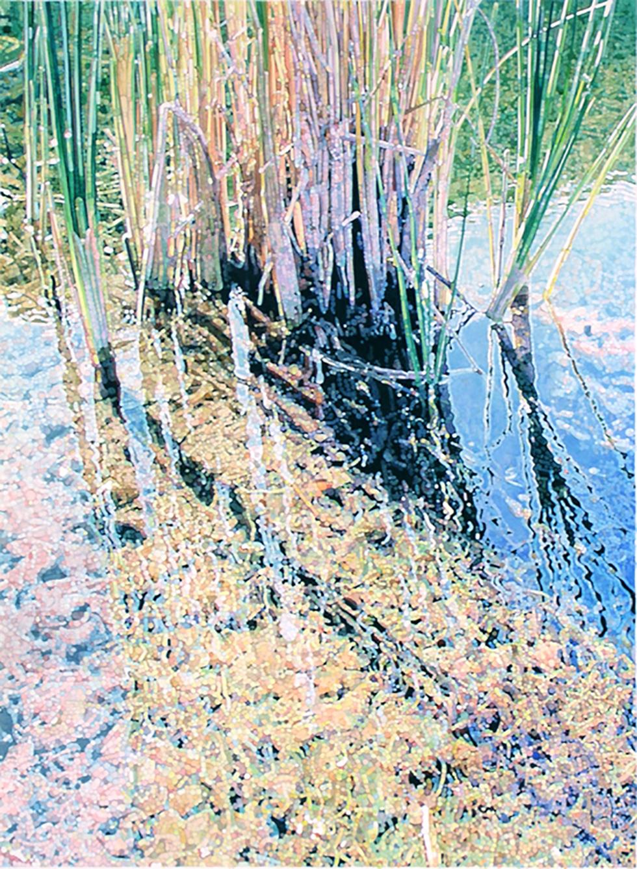 Reeds V