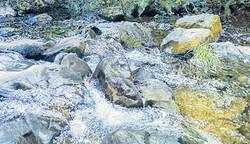 Papermill Creek II