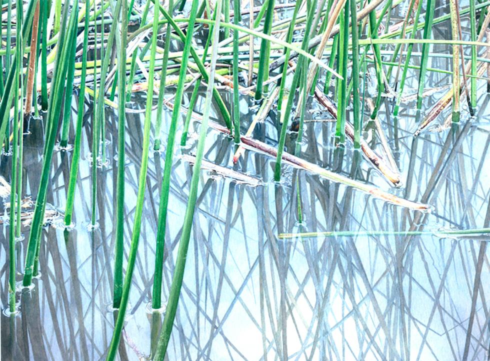 Reeds IV