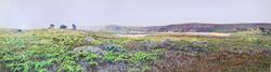 Limantour Estuary