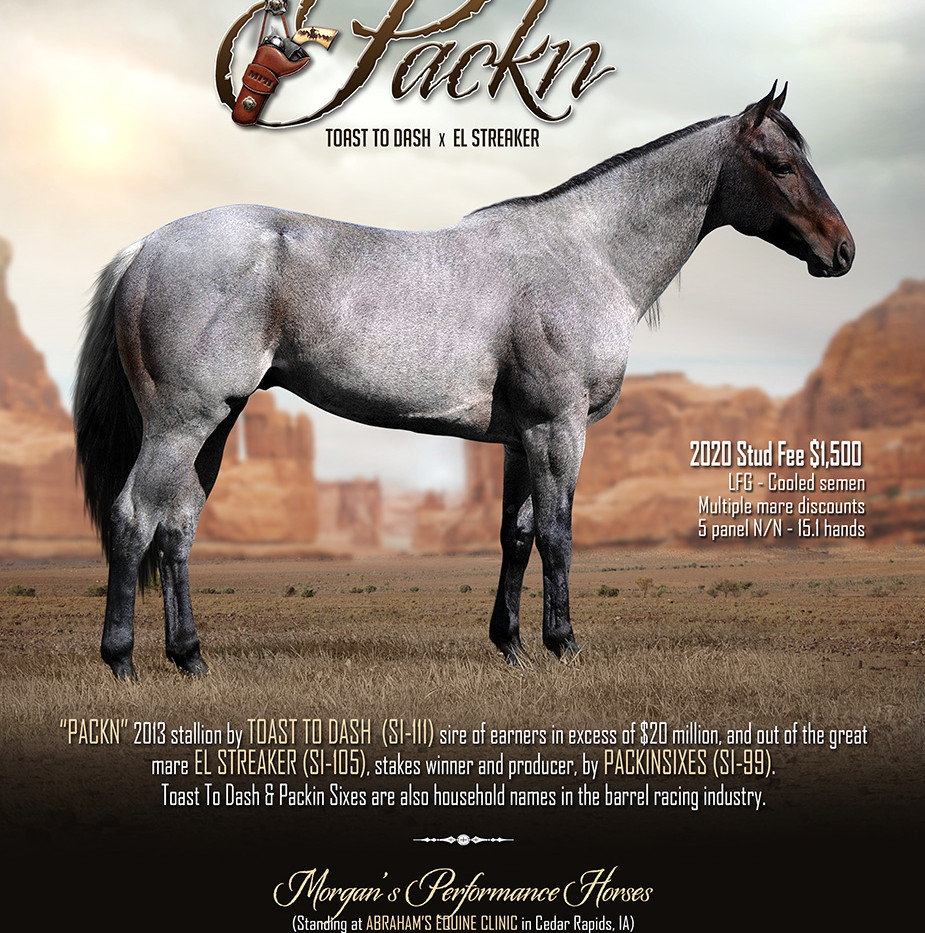 2020 Packn Stallion Ad