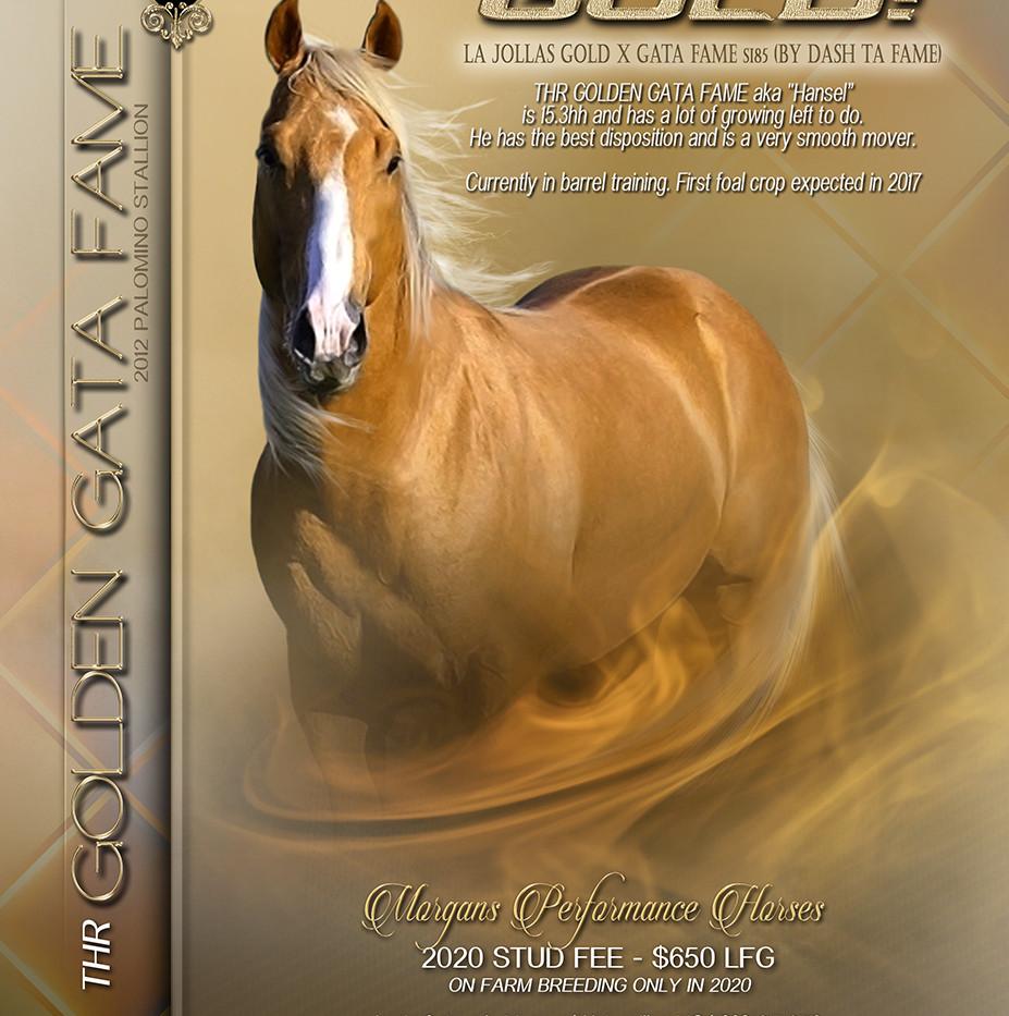 2020 THR Golden Gata Fame Stallion Ad