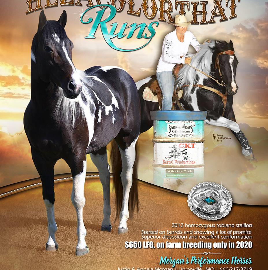 2020 hezacolorthatruns stallion ad