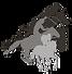 morgans-performance-horses-divider-logo.
