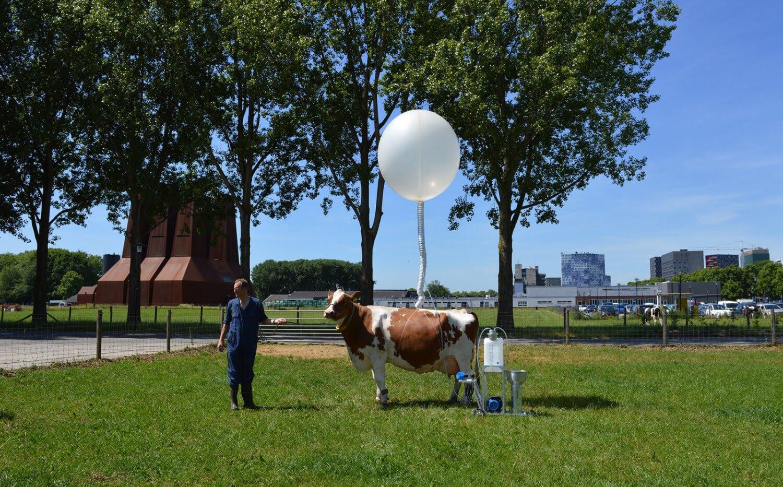 cow-co.jpg