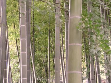Oh...goop. Miyabi Bamboo Charcoal vs. Binchotan