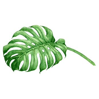 Tropical%20Leaves%206_edited.png