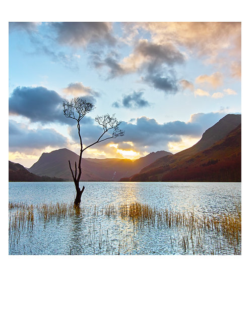 Buttermere Tree, 2015 (A2)