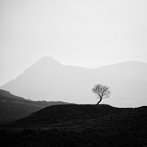Resilience, Assynt, 2020