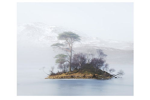 Trees in the Mist, Assynt, 2019 (A3)