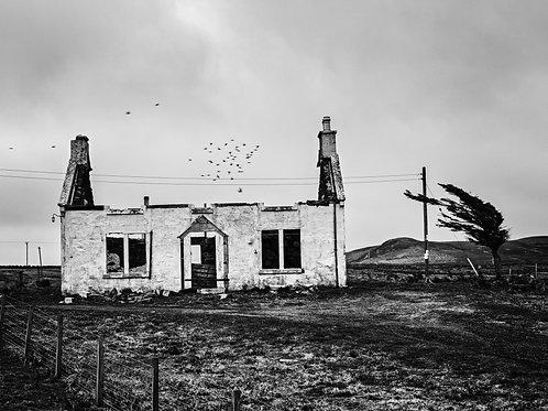 "Starlings, Isle of Skye (10x8"")"