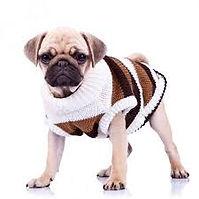 perro con ropa.jpeg