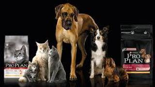 Logo Pro Plan Perros y Gatos.jpg